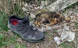 May mắn thay một chú chó con đang hấp hối ngoài bãi rác bỗng được người đàn ông tốt bụng cứu sống