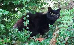 Con mèo biết gọi người tới cứu chủ nhân 83 tuổi bị ngã xuống vực sâu 20 mét