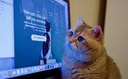 Thêm một điểm tương tự đáng kinh ngạc nữa giữa con người và mèo: bộ gen