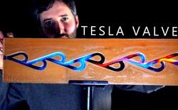 Nikola Tesla phát minh ra chiếc van kỳ diệu này vào năm 1920, nhưng lũ cá mập đã có nó trong bụng từ 450 triệu năm trước