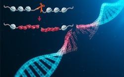 Suy nghĩ quá nhanh gây đứt gãy DNA trong não bộ, hậu quả của nó là gì?