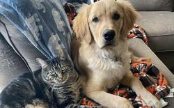 Con mèo tinh ranh biết dụ chó vào nhốt trong chuồng để có thời gian ở riêng với chủ