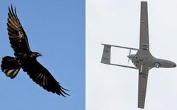 Dịch vụ giao hàng bằng drone của Google 'thất thủ' trước một bầy quạ