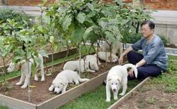 Tổng thống Hàn Quốc đề nghị 'cấm ăn thịt chó'