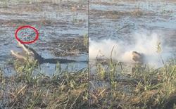 Cận cảnh cá sấu vồ lấy drone đang bay vo ve trên đầu, cắn cháy cả drone khiến khói bốc mù mịt