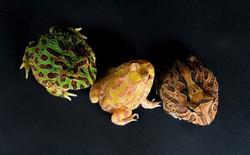 Những khám phá mới về các loài vật