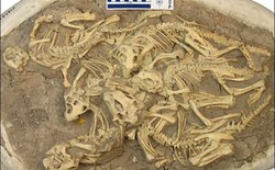 Hóa thạch và những điều bí ẩn (phần 2)