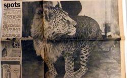 Điểm mặt những sản phẩm hiếm hoi của giao phối khác loài ở động vật