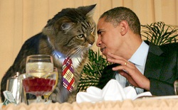 """Những chú mèo đặc biệt có """"nghề nghiệp"""" ổn định trên thế giới (Phần I)"""