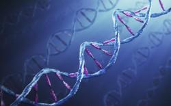 Phát hiện ra gen quy định trí thông minh phụ thuộc yếu tố di truyền