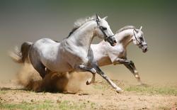 Năm Ngọ khám phá những điều thú vị về loài ngựa