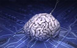 """Đa nhiệm """"đa phương tiện"""" không tốt cho cấu trúc não bộ"""