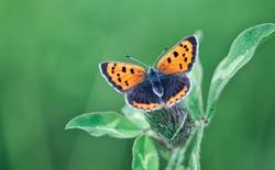 Bộ sưu tập hình nền bướm xinh tuyệt đẹp cho máy tính