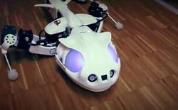 """[Video] Pleurobot - bộ xương robot di chuyển đúng """"phong cách"""" một chú kỳ nhông"""