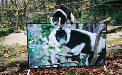 Vườn thú trang bị loạt TV 4K đắt tiền để chiếu cho khỉ xem