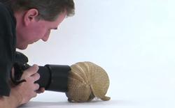 [Video] Chụp ảnh động vật là một công việc vô cùng khó khăn