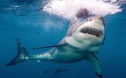 Đứt cáp biển, xin đừng đổ lỗi cho cá mập!
