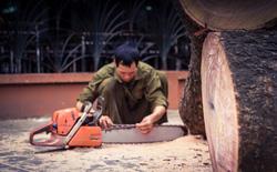 Những con số thương tâm trong vụ 6.700 cây xanh đã và đang bị chặt tại HN