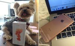 Apple chưa bán, đã có người dùng nhận được iPhone 6s vàng hồng