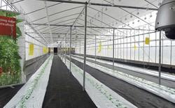 FPT và Fujitsu xây dựng nhà máy rau tại Hà Nội