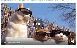 Đã có thể sử dụng ảnh GIF cực vui nhộn trên Facebook