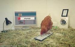 Công ty thuê gà làm... giám đốc truyền thông