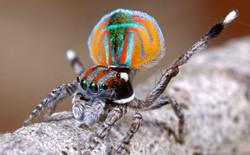 Vì sao một số người trong chúng ta lại sợ nhện?