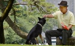 Nhật Bản: Chụp ảnh bãi phóng uế của chó để cải thiện vệ sinh