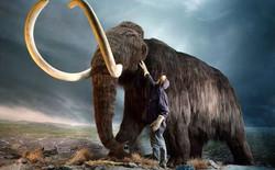 Voi ma mút tuyệt chủng là do khí hậu chứ không phải con người