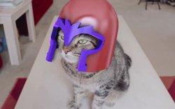[Video] Khi những chú mèo trở thành siêu nhân