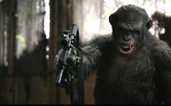 Một con tinh tinh bất ngờ dùng gậy đánh rơi drone