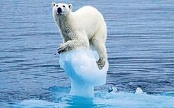 Trải qua năm nóng nhất lịch sử, nước biển dâng cao đến mức vô cùng nguy hiểm