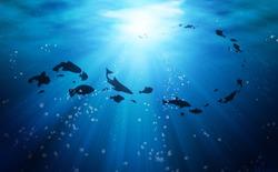 [Video] Cùng tìm hiểu đại dương bằng việc lặn trong… sa mạc