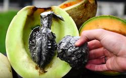 Sẽ thế nào khi đổ nhôm nóng chảy vào quả dưa gang?