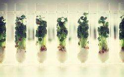 Trong tương lai chúng ta sẽ ăn gì để tồn tại?