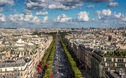 Nếu bạn vẫn nghĩ cây xanh làm cho thành phố sạch hơn thì bạn đã nhầm