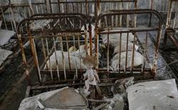"""Quay lại """"thị trấn ma"""" Chernobyl sau 30 năm thảm họa hạt nhân"""