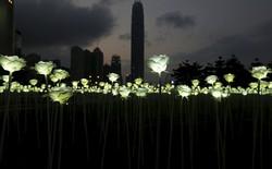 [Video] Valentine đậm chất công nghệ với 25.000 bông hồng trắng làm bằng đèn LED