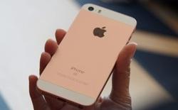 Bỏ ra 11 triệu đồng, bạn sẽ nhận về 5 điểm nổi trội trên iPhone SE