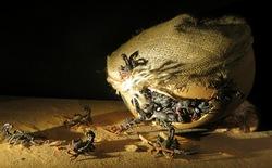 10 loại vũ khí côn trùng kinh dị từng được sử dụng trong chiến tranh