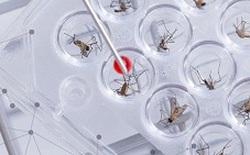 Cuộc chiến chống loài muỗi lây truyền Zika sẽ được quyết định dựa vào ý kiến người dân