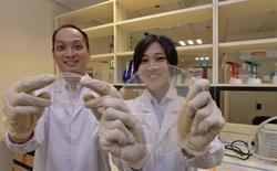 Quên màng bọc đồ ăn bằng nilon đi, sáng kiến mới này vừa không độc hại, còn tăng gấp đôi thời gian bảo quản