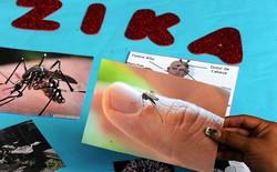 Muỗi đặc biệt chống virus Zika sắp được thử nghiệm ở Việt Nam và nhiều nước khác