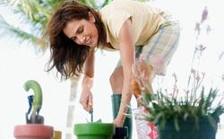 Quên phòng tập gym đi, các bác sĩ khuyên bạn hãy làm vườn