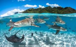 40 bức ảnh xuất sắc về chủ đề đại dương