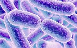 Khai quật vi khuẩn cách ly 4 triệu năm từ lòng đất, nó bất ngờ kháng 7/10 loại kháng sinh hiện tại