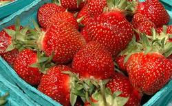 Với chất bảo quản mới này sắp tới bạn sẽ không phải lo tốn tiền điện để bảo quản hoa quả nữa