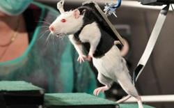 Lần đầu tiên trong lịch sử, các nhà khoa học đã tái tạo được tế bào thần kinh tủy sống