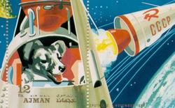 Những chú cừu, vịt, gà, chó đã bắt đầu hành trình thám hiểm vũ trụ ra sao?