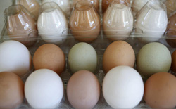 Ở xứ sở này, 150 USD chỉ mua nổi 12 quả trứng